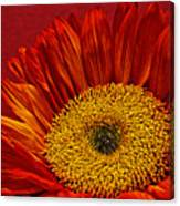 Red Sunflower Viii Canvas Print