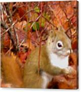 Red Tail Squirrel  Canvas Print