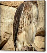 Red-tailed Hawk 4 Canvas Print
