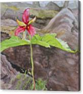 Red Trillium In The Spring  Canvas Print