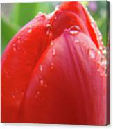 Red Tulip Flower Macro Artwork 16 Floral Flowers Art Prints Spring Dew Drops Nature Art Canvas Print