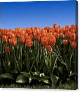 Red Tulip Garden Canvas Print