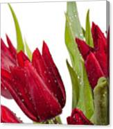 Red Tulip Heads Sprinkled Canvas Print