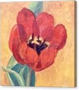 Red Tulip Canvas Print