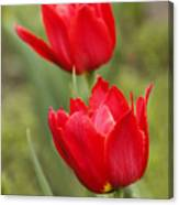 Red Tulips In A Meadow Closeup Sunny Spring Day Canvas Print