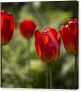 Red Tulips In Light Canvas Print