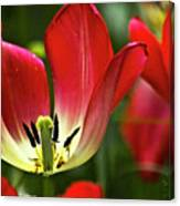 Red Tulips Petals Canvas Print