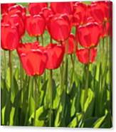 Red Tulips Square Canvas Print