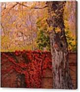 Red Vine With Maple Tree Canvas Print