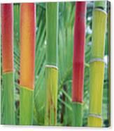 Red Wax Palm Stalks Canvas Print