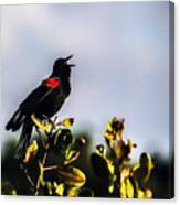 Red Wing Black Bird  Canvas Print