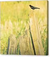 Red-winged Blackbird Canvas Print