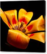 Red-yellow Tulip 1 Canvas Print