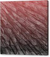 Red.385 Canvas Print