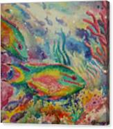 Redband Parrotfish Canvas Print