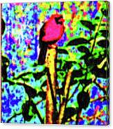 Redbird Dreaming About Why Love Is Always Important Canvas Print