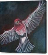Redbird Canvas Print