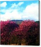 Redbud In The Blue Ridge Canvas Print