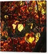 Redbud Canvas Print