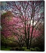 Redbuds For Mama Canvas Print