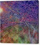 Redbud's Canvas Print