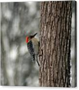 Redheaded Woodpecker Canvas Print