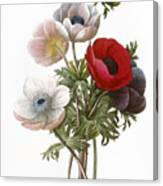 Redoute: Anemone, 1833 Canvas Print