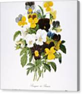Redoute: Pansy, 1833 Canvas Print