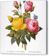 Redoute: Roses, 1833 Canvas Print