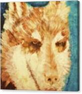 Red's Wolf Canvas Print
