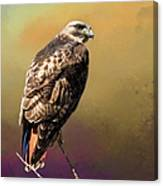 Redtail Portrait Canvas Print