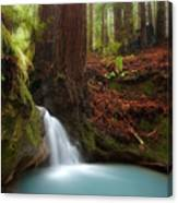 Redwood Forest Waterfall Canvas Print