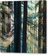 Redwood Light Canvas Print