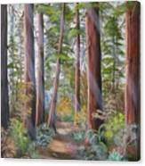 Redwood Path Canvas Print