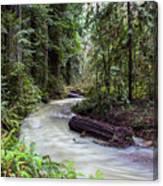 Redwood Stream Canvas Print