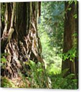 Redwood Tree Art Prints Redwoods Forest Canvas Print