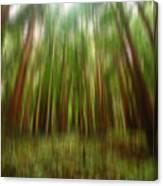 Redwoods Canvas Print