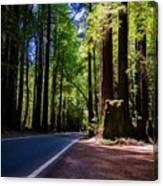 Redwoods Road Canvas Print
