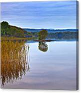 Reeds And An Islet In Lough Macnean Canvas Print
