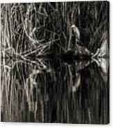 Reeds And Heron Canvas Print