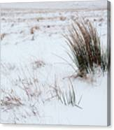 Reeds And Snow Canvas Print