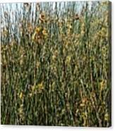 Reeds II Canvas Print