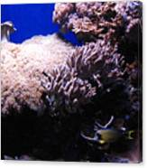 Reef Tank Canvas Print