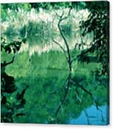Reflected Branches Canvas Print
