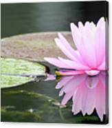 Reflected Water Lily Canvas Print
