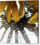 Reflected Yellow Petals Canvas Print