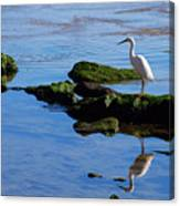 Reflecting On Dinner Canvas Print