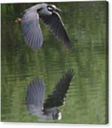 Reflecting On Flight Canvas Print