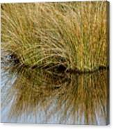 Reflecting Reeds Canvas Print
