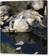 Reflecting Rock-sequoia National Park Canvas Print